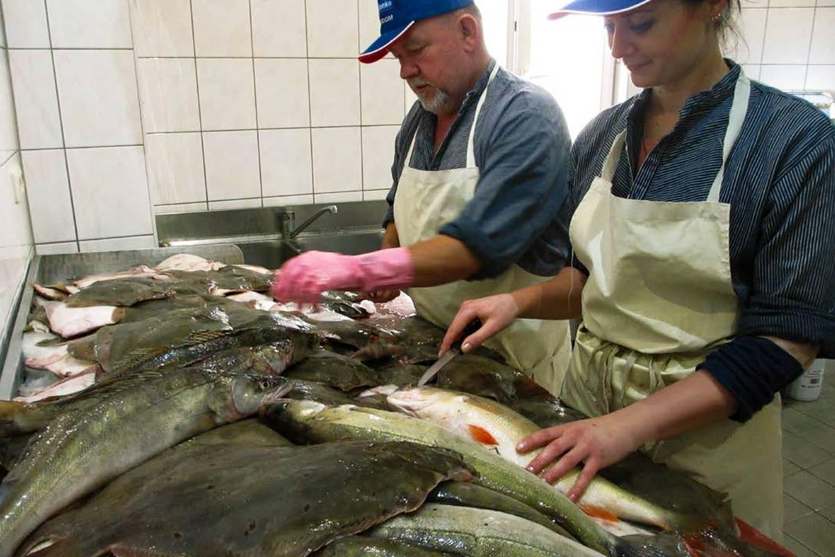Zubereitung Fisch